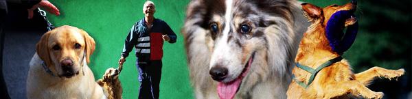 show-dogs-banner.jpg