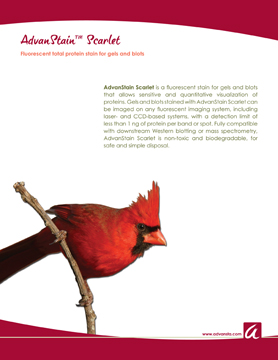 AdvanStain Brochure 4pg