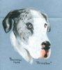 Dog potrait by Trudie Barreras