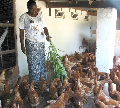 Sister with chickens