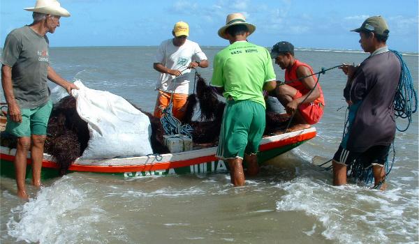 Harvesting Algae in Brazil