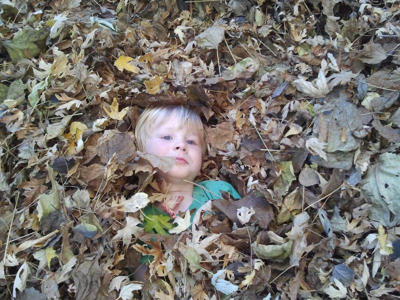 boone in the leaves