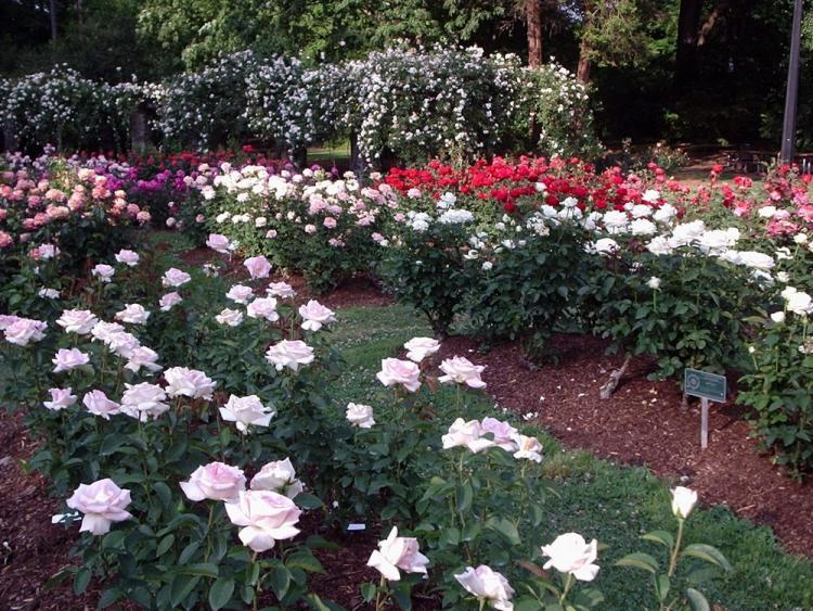Rose Garden at Raleigh Little Theatre