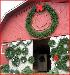 Christmas Tree Cutting - Circle Tree Farms