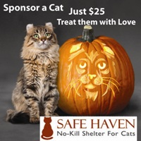 Safe Haven for Cats Fall 2011