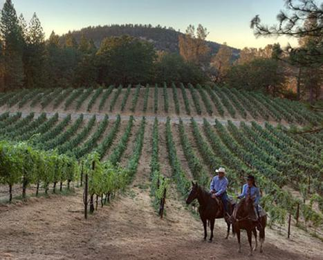 Hawk and Horse Vineyards