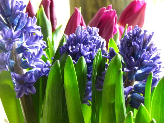 hya and tulip