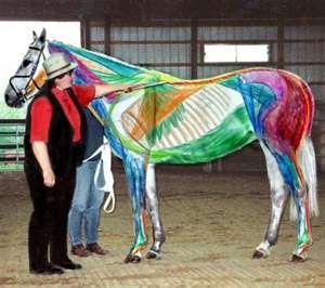 Susan Harris and horse anatomy