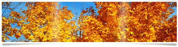 yellow-leaves-tree.jpg