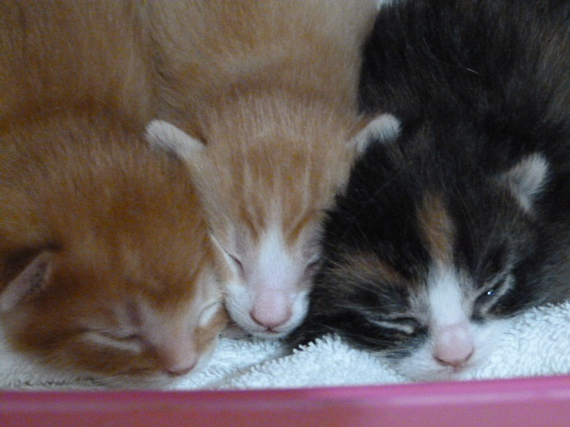 Thoes kittens