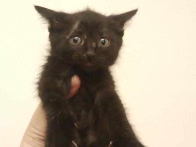 Bijou Kitten 5