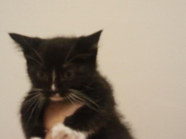 Bijou Kitten 3