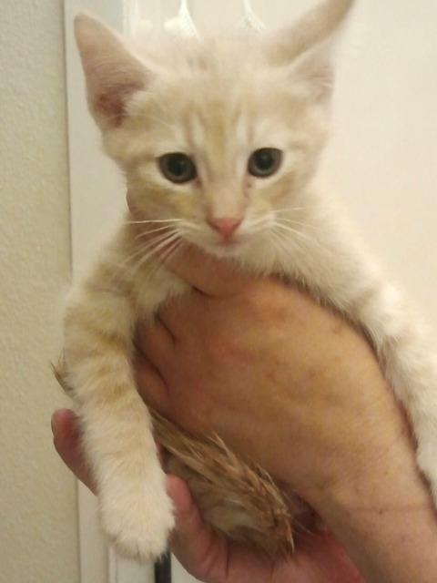 Bijou Kitten 1