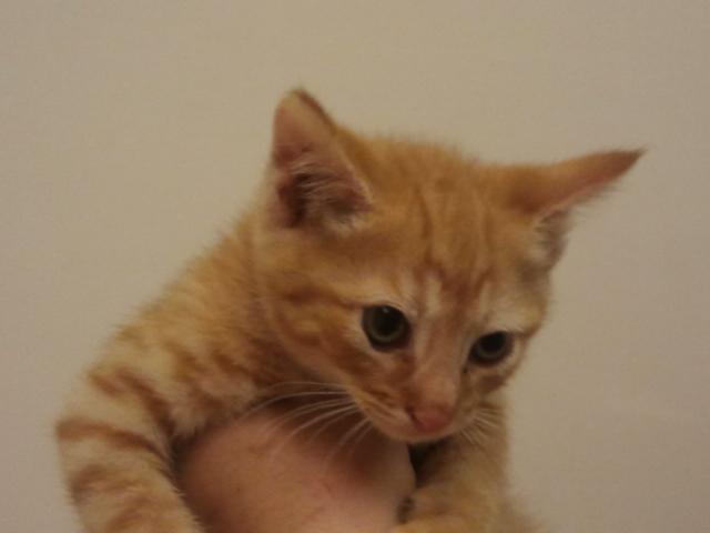 Bijou Kitten 4
