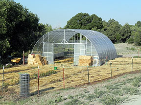 Greenhouse June