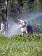 Lilo in Sprinkler