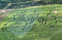 Corn Maze Aerial