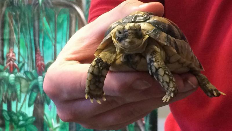 Zoomobile turtle