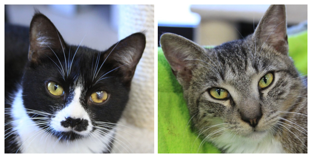 Cat Depot Rescue Cats