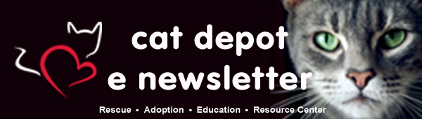 Cat Depot Header E Newsletter