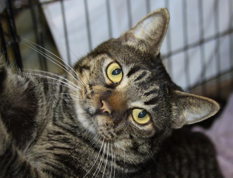 Cat Depot Cat Pella
