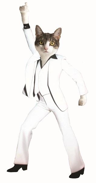 Cat Depot Disco Cat