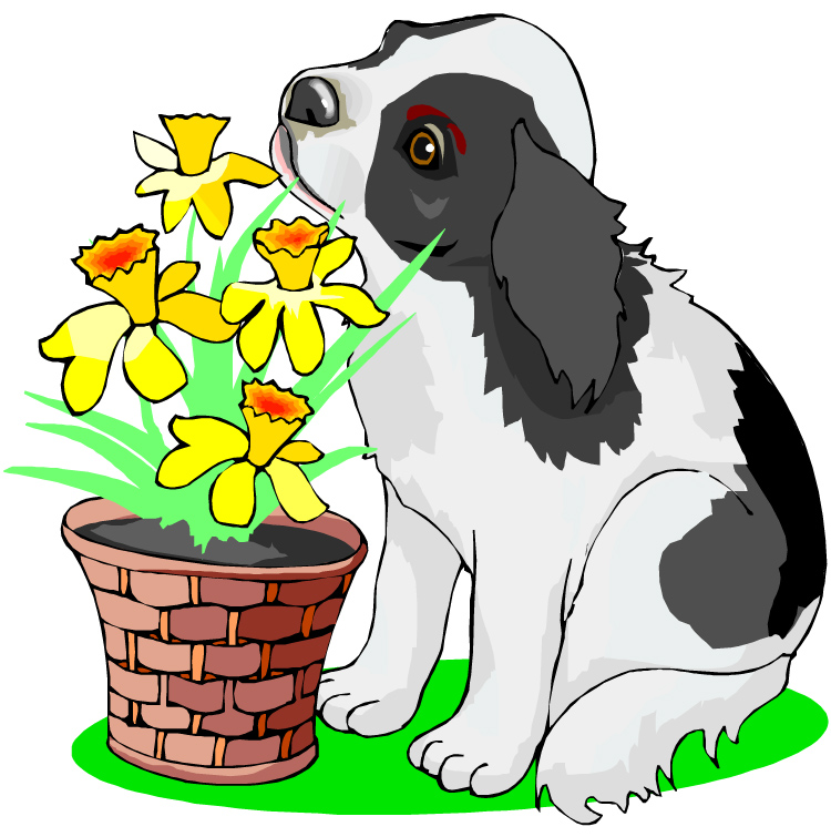 Puppy with flowers