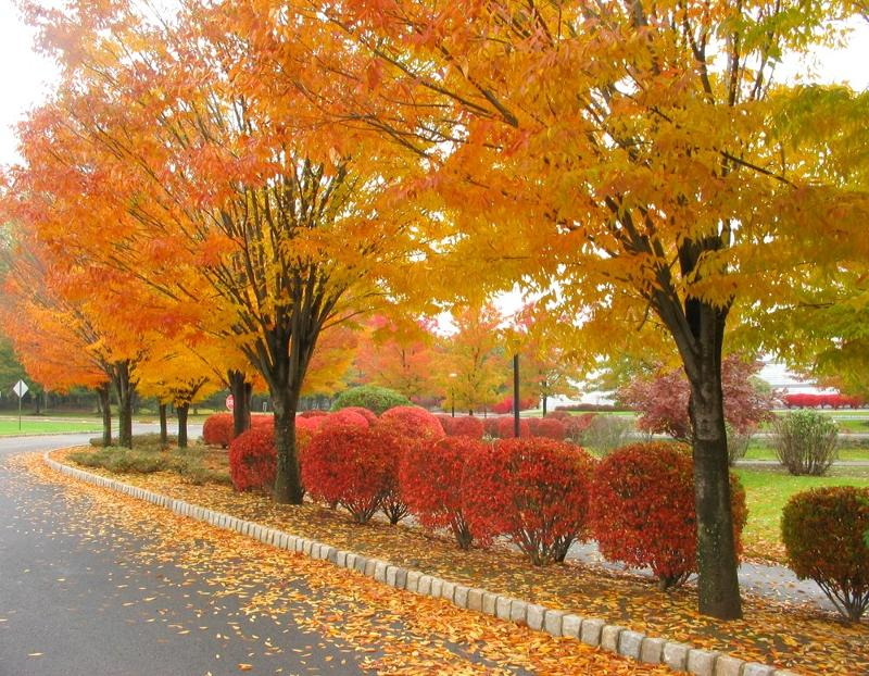 Autumn Therapy Tips