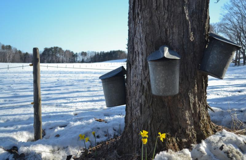 Sugaring: Tapping into our Creativity