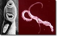 parasites21 nlj.jpg