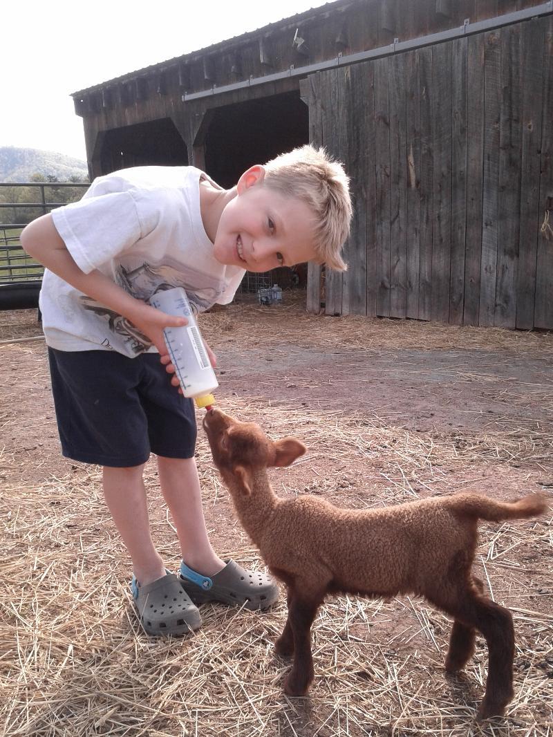 Eyrie feeding newborn