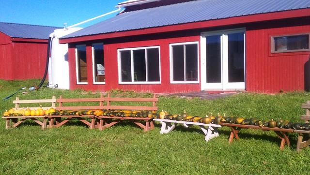 pumpkin bench