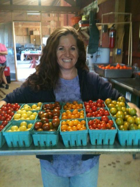 Rainbow of Tomatoes