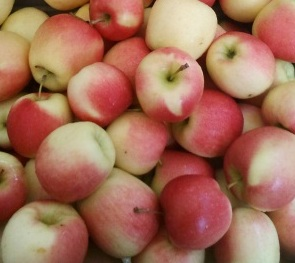 Peaches (the last of 'em!).  Apples.  Heirloom Tomatoes.  Pumpkins.  At market this weekend!
