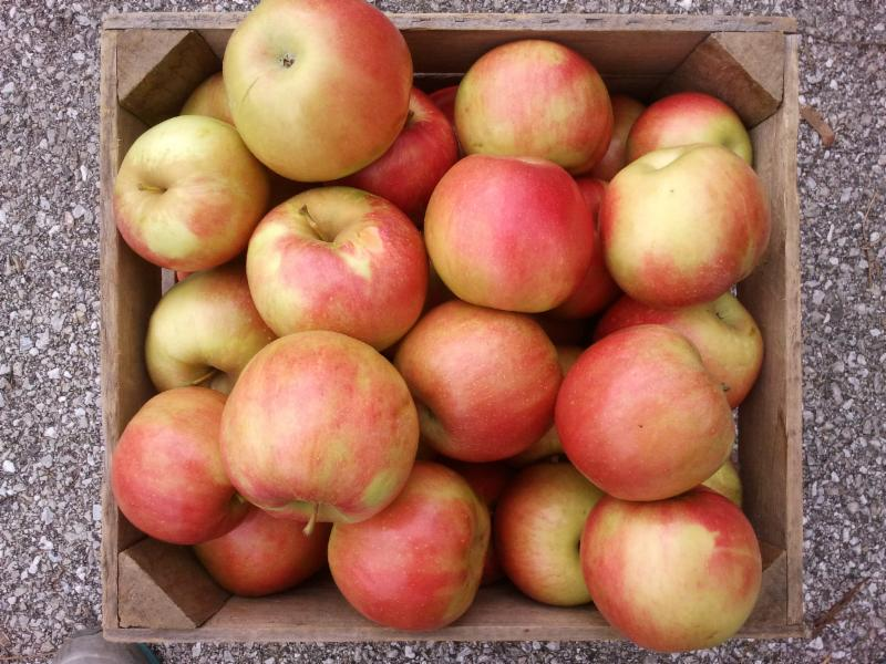 Kuhn Orchards eNewsletter:  Great Cooking Apples -- A Note from Dave
