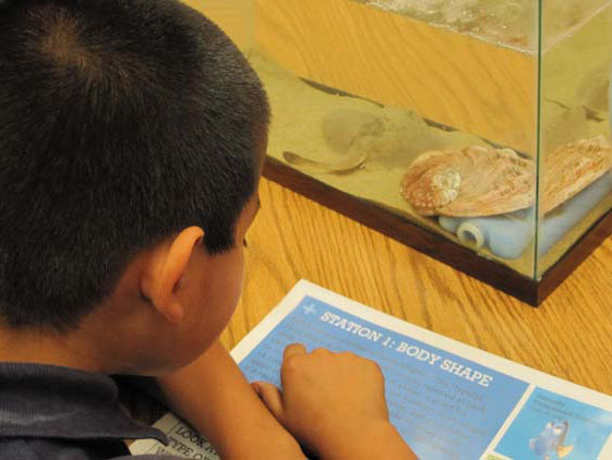 Student learning about fish identification.