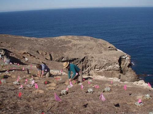volunteers planting at elephant seal cove