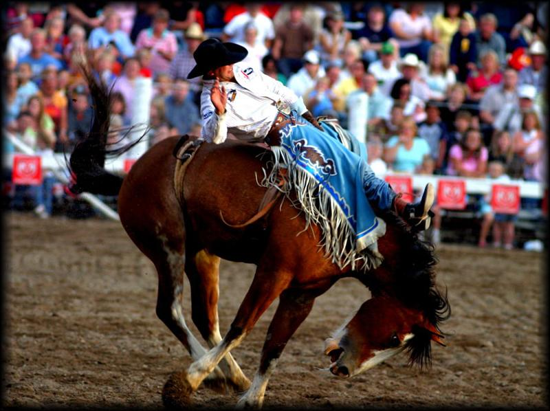 Bucking Bronco Rodeo Picture from: http://www.sxc.hu/gallery/thecore4
