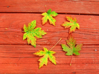 MiFall_leaves