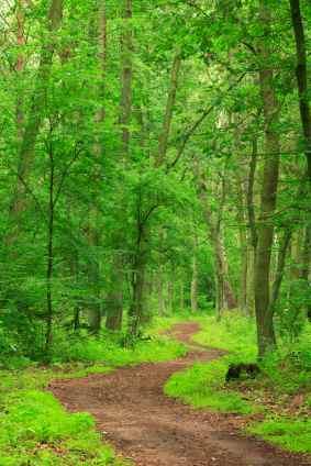 LifeCoachNotesTrees
