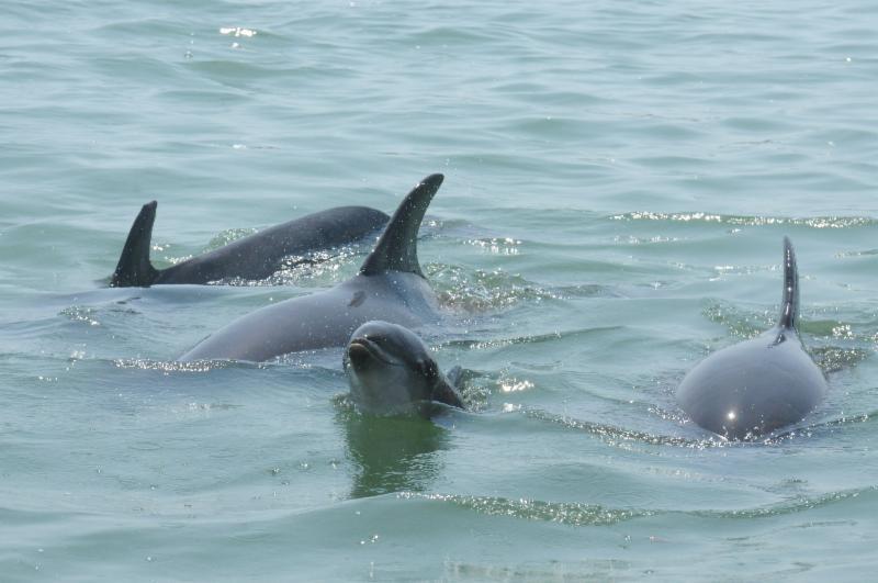 Sarasota Dolphin Research Program