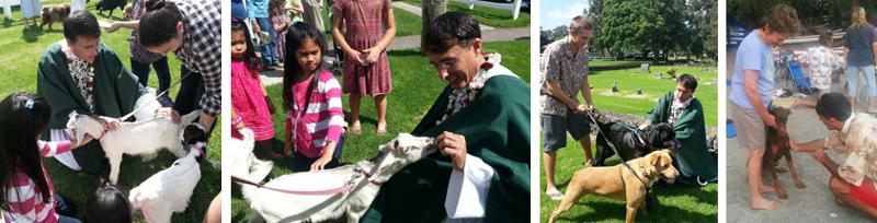 StJ Blessing Animals 2012