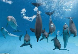 dolphins in community