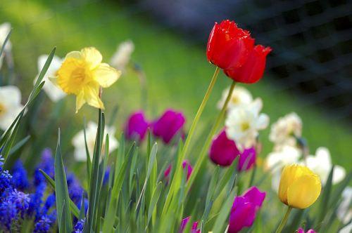 Spring by Anna Marintz