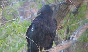 Condo in Zion National Park