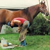 Rob shoeing Rocky