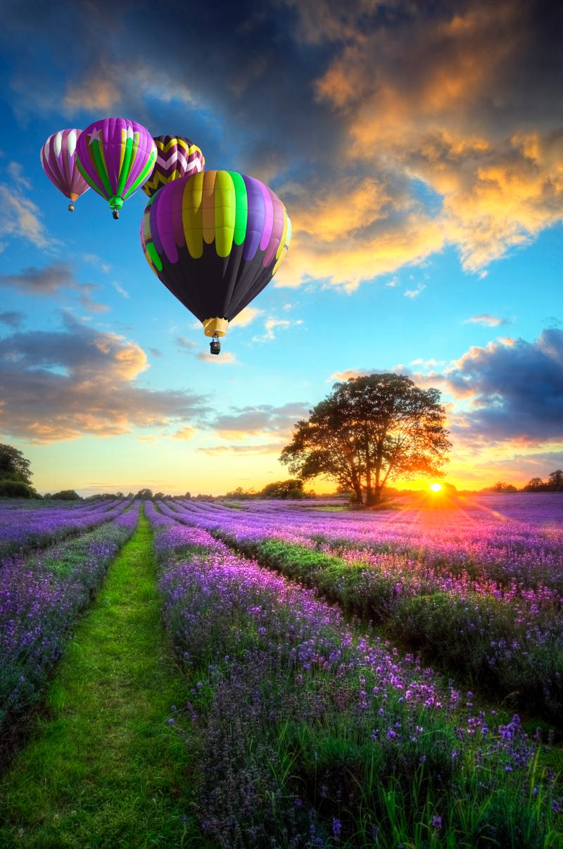 Balloons and Lavender Field