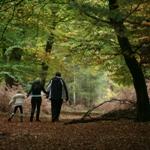 Family walking at Burley