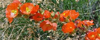 wild plants 350