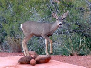deer 121028